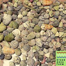 10 Hermit Crab Shells for Saltwater Aquarium