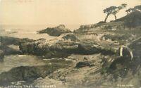 California Pillsbury #1280 Ostrich Tree Monterey RPPC Photo Postcard 20-5563