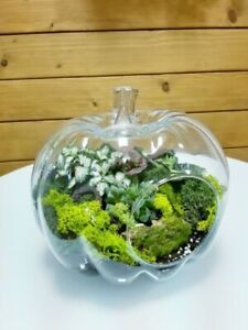 Clear Glass Pumpkin shape Terrarium vase 17 cm planter tea light Handmade
