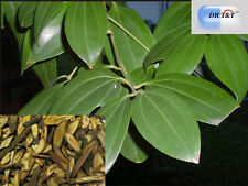 DR T&T 100g erba secca di GUI ZHI (CANNELLA TWIG)