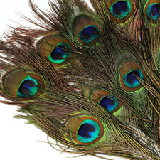 10pcs Natural Peacock Tail Eyes Feathers 8-12 Inches / about 23-30cm