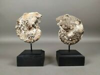 Mammites- Two beautiful examples of Moroccan mammites mounted on wood stand.