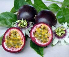 10Seed Purple Passion Fruit Bonsai Plant Tree House Herb Garden Flower Pot Decor