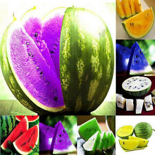 10Pcs Rare Sweet Watermelon Seeds Fruit Seed White Green Purple 3 Kinds Color