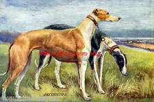 Antique Art~Greyhound Dogs~ NEW Large Note Cards