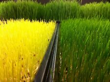 5 Pounds Organic Hard Red Winter Wheatgrass Seeds - Non Gmo! Amazing For Juicing