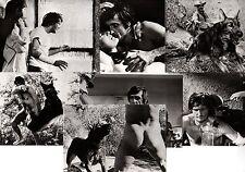 The Dog 7 Pressefotos El Perro A Dog Called… Vengeance Jason Miller Lea Massari