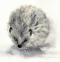 HEDGEHOG ORIGINAL PRINT OF WATERCOLOUR PAINTING BY DIANE ANTONE IDEAL XMAS GIFT