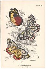 1890's BUTTERFLY INSECTS color chromolithograph - #LVI