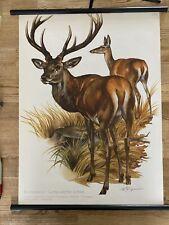 Hirsch Wald Jagd  Rollkarte  Schulwandkarte 50 cm x 70 cm