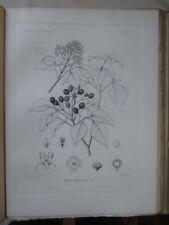 Vintage Print,PLATE 36,TORCH WOOD,Silva,Trees,1st Ed.c1900