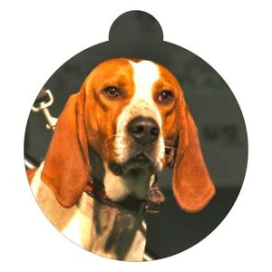 American English Coonhound Breed Picture Pet ID tag