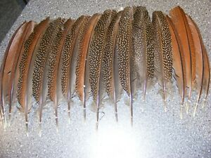 Argus Pheasant - Wing Feathers