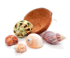 Natural Hermit Crab Bowl Half Coconut Shell, 5 Hermit Crab Shells, Free Shipping