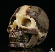 "2.0"" Dragon Septarian Stone Carved Crystal Skull, Realistic,Crystal Healing"