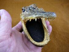 """(G-Def-315) 4-1/8"""" Deformed Gator ALLIGATOR HEAD jaw teeth TAXIDERMY"""