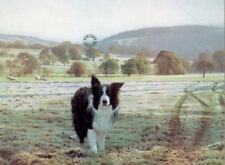 More details for steven townsend roger border collie collies sheep dog