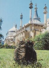 2 Cats At Brighton Pavilion Blank Greetings Card From Painting By Celia Pike 038