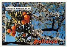 B75661 Mallorca naranjos y almendros en flor  spain