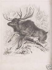 Thomas Landseer Elk Elch Jagd Jäger Geweih Hirsch Taiga Skandinavien Finnland