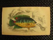 RARE HAND-COLORED FISH ENGRAVINGS 1835-1843 SIR WILLIAM JARDINE GROUP 3