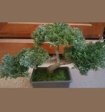Faux Japanese Cedar Bonsai Tree Healing Meditation Budda God Power Earth Divine