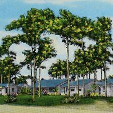 Vintage Apopka Motor Court - Apopka, Florida Postcards P48