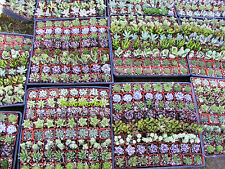 64 Assorted Succulent Plants - 2 inch pot !! Great for wedding party favors
