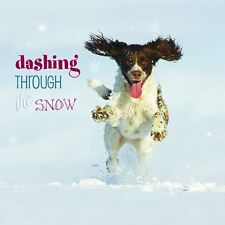 Springer Spaniel Charity Christmas Cards 10 Pack Dashing Through The Snow Xmas