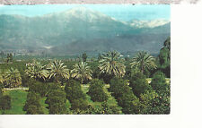 Orange Groves, Palms and Snow Capped Mountains Southern  CA  Postcard 2237