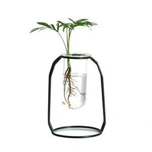 Tube Flower Vase Hydroponics Flower Water Plant Flower Pot with Metal Frame