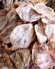 """20Pcs+ (5oz) Small /12pcs+(6 oz) Medium Organic Dried Whole Squid 3"""" - 5"""""""