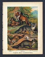 Arctic Fox, Silver Fox, Vintage 1897 Chromolithograph Print, Antique, 018