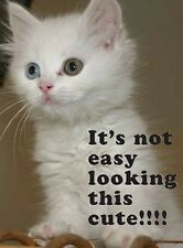 IT'S NOT EASY LOOKING THIS CUTE CAT KITTEN TIN SIGN METAL PLAQUE 100's MORE 679