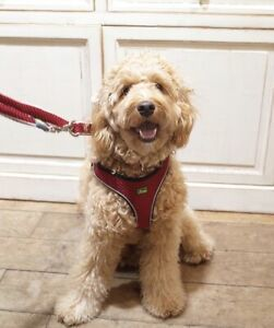 Genuine Hunter Hilo Choke Free Vest Harness & Lead Set  Red Puppy/Dog(M)