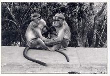 Monkey Family on the road to Mysore, India 1985•Photo Anne Garde 4x6 POSTCARD