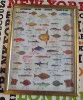 Décoration Murale,Set de Table 42 x 30 cm Poisson de mer Requin Taupe Esturgeon
