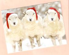 Trio of Sheep Lamb Santa Hat Christmas Cards Box of 12 Fleece Navidad