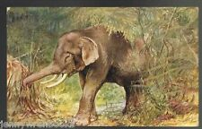 The Elephant Postcard - RANKIN, George - Tuck's Wild Animal Oilette
