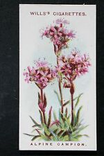 Alpine Campion     Vintage 1913 Illustrated Botanical Colour Card  VGC