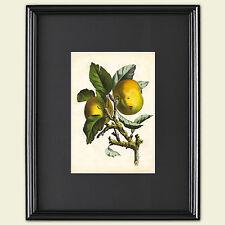 Vintage Grabado Botánico hortícolas victoriana arte Sketch Poster A3 No. 2