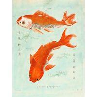 Fish Japanese Koi Unframed Wall Art Print Poster Home Decor