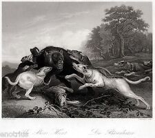 Caccia all'Orso con Cani. Bear Hunt. Bärenjagd. Steel Engraving. STAHLSTICH.1850