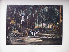 TAHITI:Gravure 19°in folio couleur/ Banian du cercle militaire de Papeete
