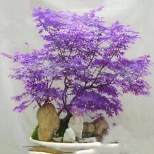20st Japanische Ahorn Baum Samen Topfpflanzen Blatt Bonsai Acer Palmatum Blau...
