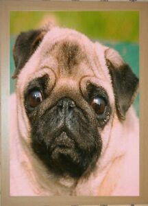 OAK FRAMED PUG FACE - 3D DOG PICTURE 365mm x 465mm