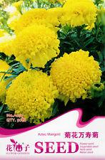 1 Pack 50 Aztec Marigold Seeds Chrysanthemum Marigold Tagetes Erecta Flower A097
