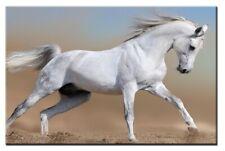 White Horse 60x40cm Large wall art canvas print artwork framed home living room