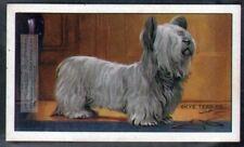 Skye Terrier Dog 75+ Y/O Ad Trade Card