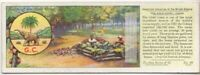 Cocoa Cacao Chocolate Plantiation Gold Coast Africa c80 Y/O Trade Ad Card